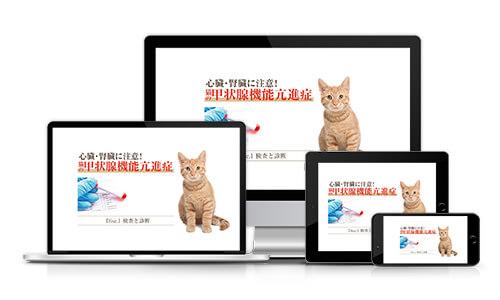 心臓・腎臓に注意!猫の甲状腺機能亢進症│医療情報研究所DVD